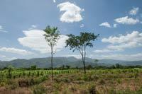 tree nation: nouvelle plantation au nicaragua