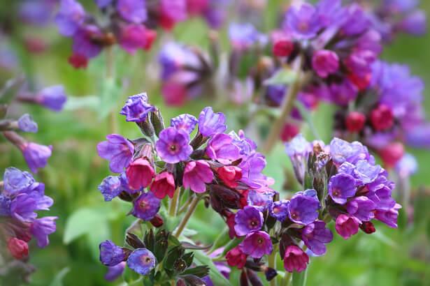 plantes médicinales, herbe médicinale, herbes médicinales