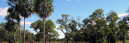 Un parc national argentin financé par les dons