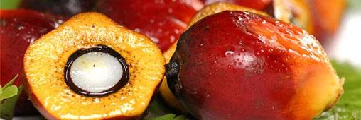 Garanti sans huile de palme : le nouvel atout communication des marques ?
