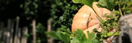 Quoi faire au jardin en automne grâce à la méthode « AUTON »