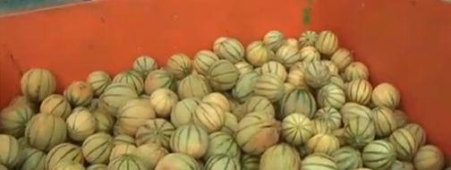 melons-dechets