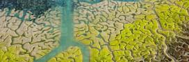 Diaporama: quand l'eau dessine des oeuvres d'art