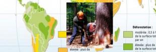 Amazonie : la déforestation ralentit nettement