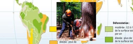 Amazonie: la déforestation ralentit nettement
