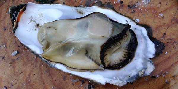 huitre-mollusque-crustace-reveillon-alimentation-04