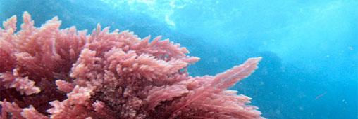 Beauté - Les algues au secours de notre peau