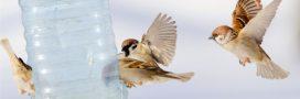 Pourquoi et comment nourrir les oiseaux en hiver?