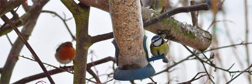 pourquoi et comment nourrir les oiseaux en hiver page 2. Black Bedroom Furniture Sets. Home Design Ideas