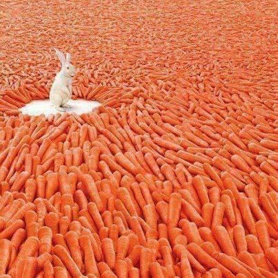 pot au feu carottes
