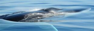 De la bière à la baleine pour retrouver ses racines viking