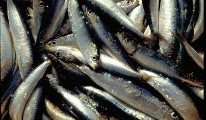 Les sardines sont riches en oméga-3