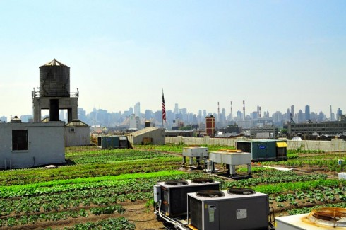 © DR, Photo: Brooklyn Grange Farm