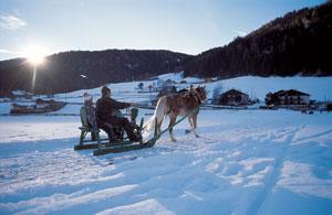Haflinger-sled