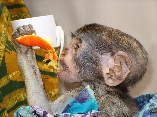 animaux-24-baby-edith-orphaned_ghana_terrie-schweitzer