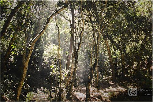 paysages-02-KodaiKanal-Tamilnadu_wishvam
