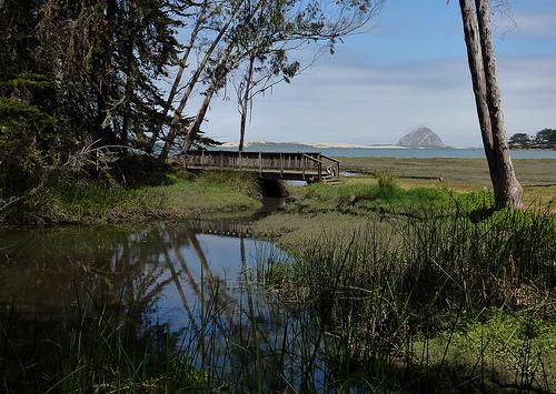 paysages-05-bid-area-morro-bay-california_docentjoyce