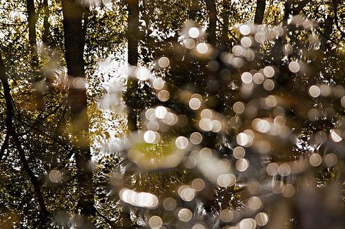 paysages-11-Riserva-Naturale-della-Palude-Brabbia-Inarzo-italie_simone-a-bertinotti