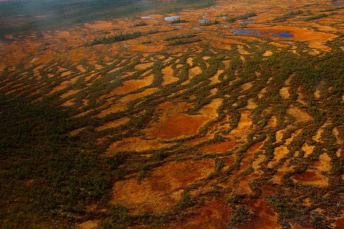 paysages-13-peatbog-at-Yuganskiy-nature-reserve-Khanty-Mansiyskiy-Avtonomnyy-Okrug-RU_Tatiana-Bulyonkova