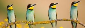 Les plus belles photos de 2012 : animaux