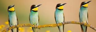 Les plus belles photos d'animaux