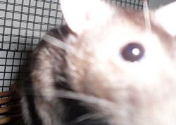 rat-test-02