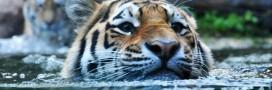 Biodiversité – 5 espèces qui font leur retour
