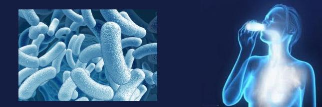 Pré- et probiotique, quelle différence ?