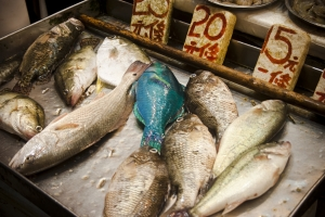 1342715_fresh_fish_for_sale