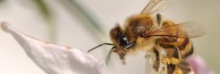 Une ruche dans la ville contre la mort des abeilles