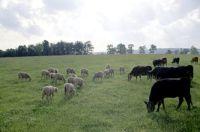 La proposition de réserver 7% des terres arables à l'écologie (une mares, une friche permettant à un ecosystème de se développer) a été revu à la baisse.