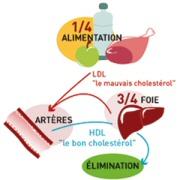 cholesterol-ldl