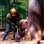 importation-bois illegal