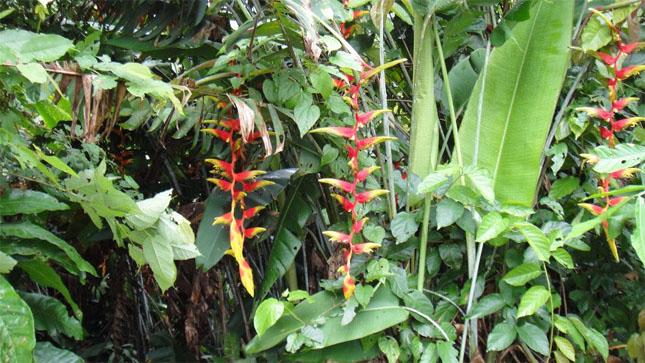 flore-costa-rica