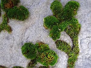 garden-rug-02