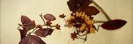 Herbonautes: participez à un herbier collaboratif