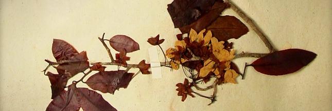 Herbonautes : participez à un herbier collaboratif