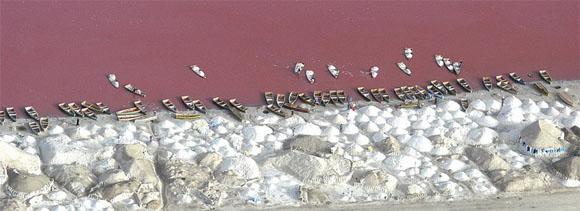 lac-rose-sel