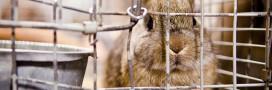 Animalter s'engage pour la fin des élevages à fourrure en France