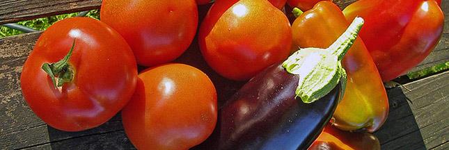 Densité nutritionnelle : le secret d'une alimentation équilibrée ?