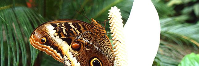 Encore un label! Biodiversity Progress … sur la biodiversité