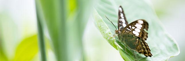 Biodiversité: des millions d'espèces encore inconnues