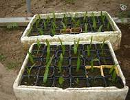 semis-jardinage-godets