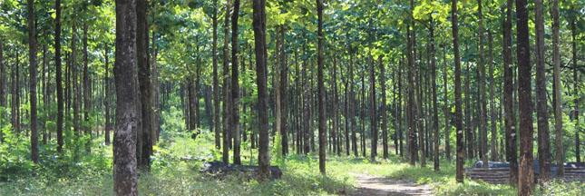 Déforestation – L'Europe interdit de vente le bois illégal