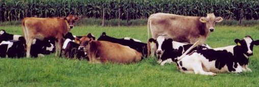 vache-pre- agriculture