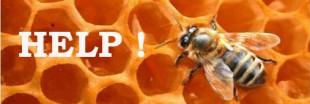 Polllinis et Mylène Demongeot au secours des abeilles