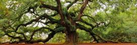 Les plus vieux arbres du monde