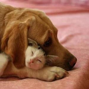 chien-chaton menthe