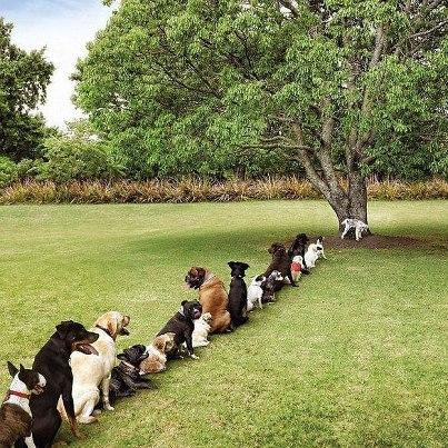 chiens-discipline