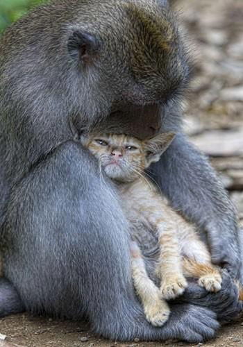 singe-chaton